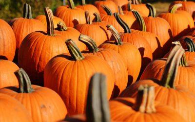 Fall Festivals!